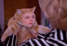 Cat Showdown