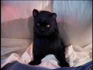 Salem in Sabrina's Bed