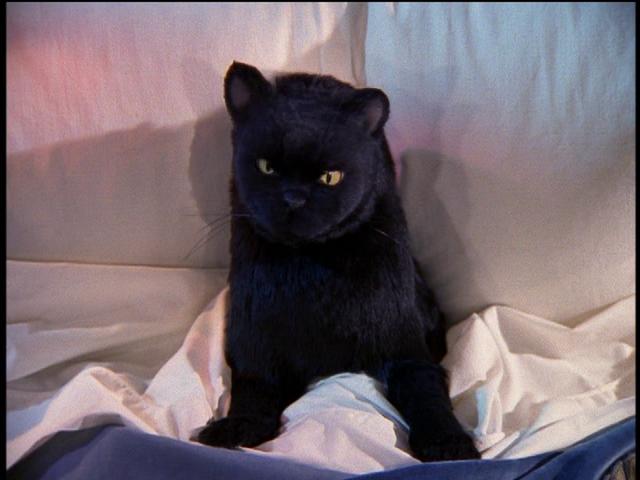 File:Salem in Sabrina's Bed.png