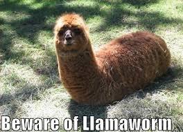 File:Llama worm.jpg