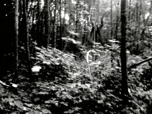 File:The Slender Man In The Forest.jpg