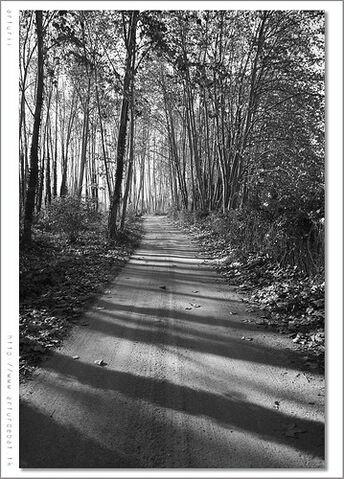 File:Black Leaves 1.jpg
