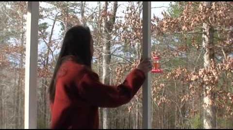 Alex Kralie's Marble Hornets trailer (Season 2 DVD extra)