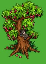File:Young Black Tree Kangaroo.PNG