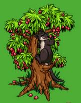 File:Mature black tree kangaroo.PNG