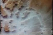 Vlcsnap-2014-12-08-14h38m31s210