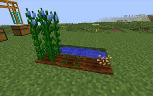 Flax Farming