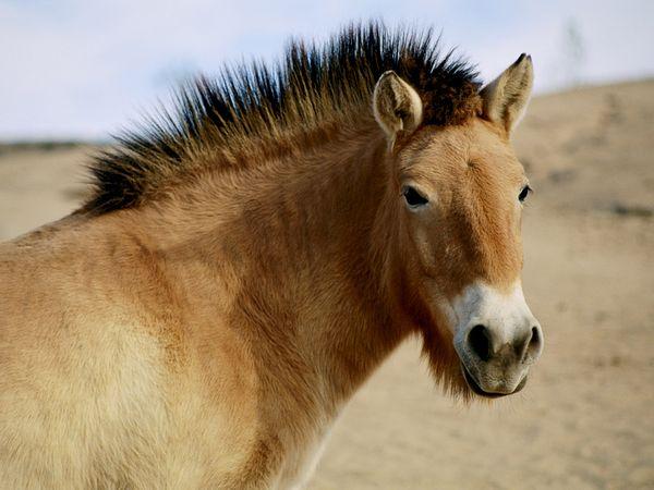 File:Wild-horse 758 600x450.jpg