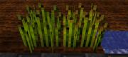 Hopswheat
