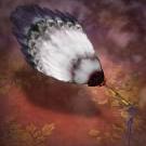 File:Feather Fan - RTKXIII.png