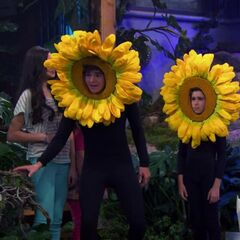 Max and Billy Sunflower
