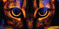 The Tygrine Cat: On the Run