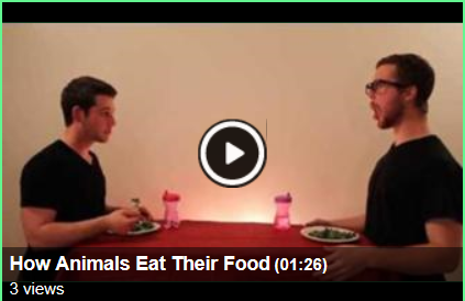 File:How animals eat their food.png