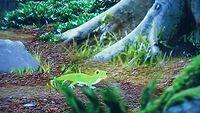 Geckoinforest