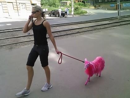 File:Pink Goat 2.jpg