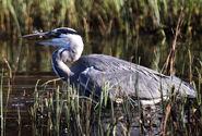 Birds.2010 2513