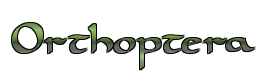 File:Orthoptera.png