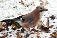 Birds.2010 3044