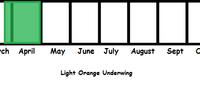 Light Orange Underwing