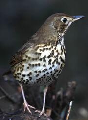 Birds.2011 220