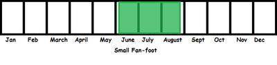 Small Fan-foot TL