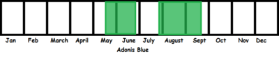Adonis Blue TL