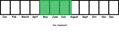 Pine Hawmoth TL