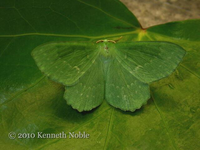 File:Large emerald.jpg