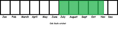 Oak Bush-cricket TL