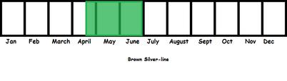 Brown Silver-line TL