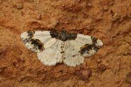 Scorched Carpet (800x532)