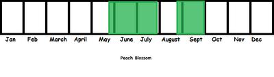 Peach Blossom TL