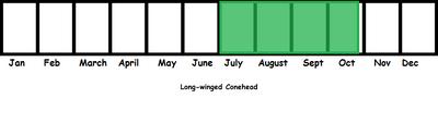 Long-winged Conehead TL