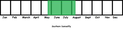 Southern Damselfly TL