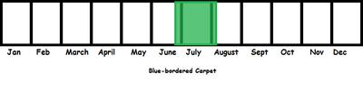 Blue-bordered Carpet TL