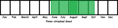 Pinion-streaked Snout TL