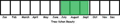Tree-lichen Beauty TL