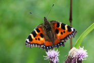 Butterflies 048