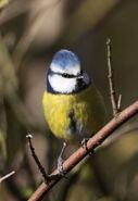 Birds.2011 805