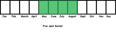 Five-spot Burnet TL