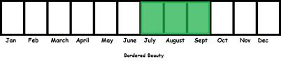 Bordered Beauty TL