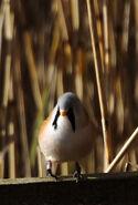 Birds.2010 2444