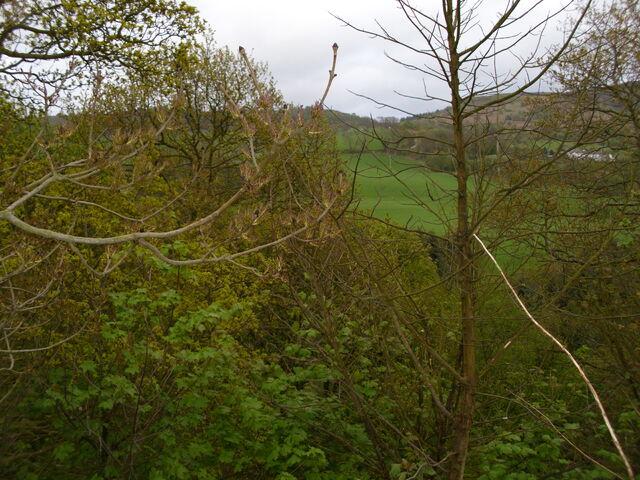 File:Woodland near aireyholme farm.jpg