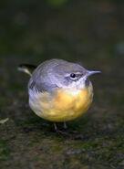 Birds.2009 031