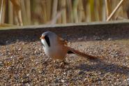 Birds.2010 2414