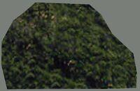 DromEd Object Model treefl4