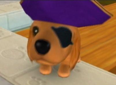 File:CatIsland El Dorado dog.JPG