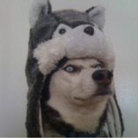 File:Dog hat.png