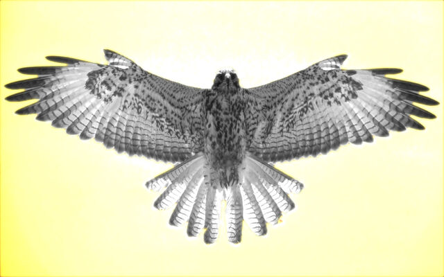 File:Falcon-002 00000.jpg