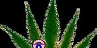 Mr. Cannabis